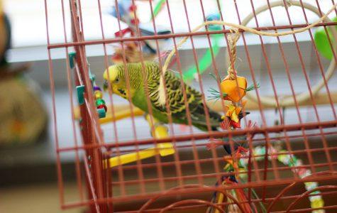 Bird joins seniors in mastering English