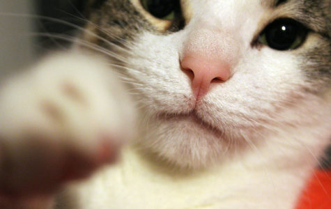 Column: Cat-astrophic misconception of having a cat