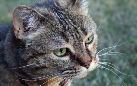 Column: Finding a furry friend