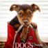 Review: 'A Dog's Way Home' wins viewers' hearts despite confusing storyline