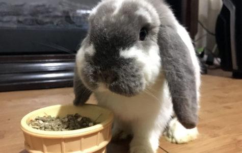 Column: Life as a rabbit's mother