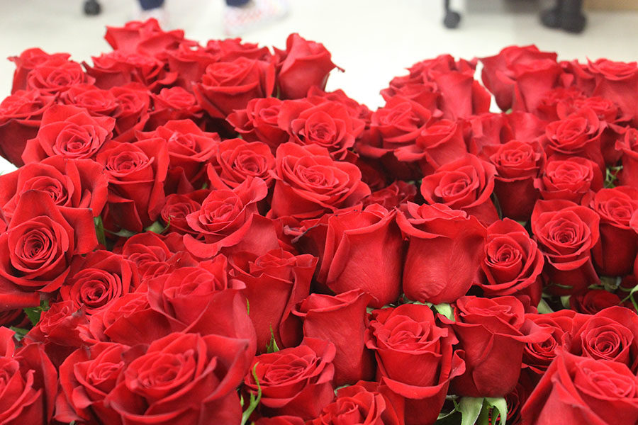 Roses+before+they%27re+cut+and+prepared+for+the+senior+class.+