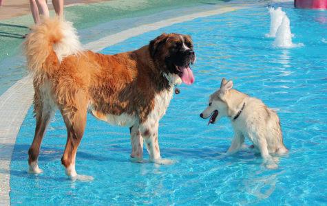 Slideshow: Doggie Dive In